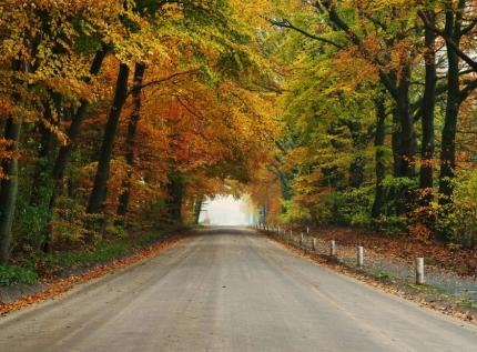 De oude Hessenweg in herfstkleuren - Foto: ©Louis Fraanje