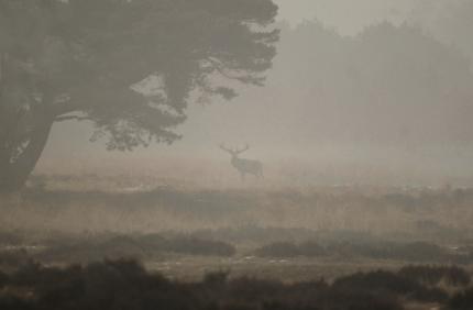 hert-mist veluwe vliegden