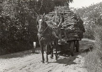Paard en wagen geladen met bossen schors, voor op de bok Bart van de Bospoort uit Lunteren