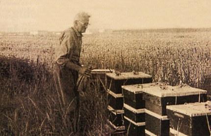Berend Kers bij z'n bijenkasten (Foto: Archief Kers)