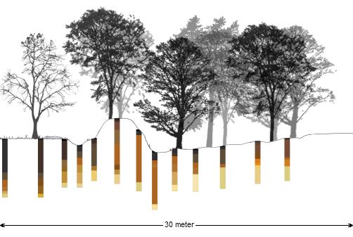 Illustratie Wildwal dwarsdoorsnede bij Kernhem, de scherpe overgang van akker naar heidegrond, waarbij de wal als grens heeft gediend, is hier zeer duidelijk zichtbaar