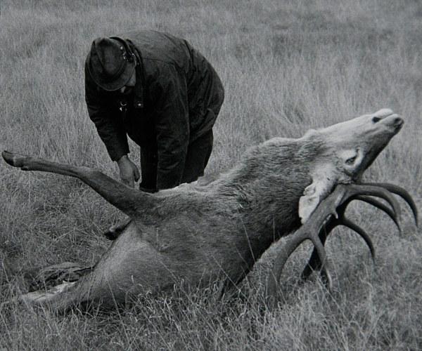 Schouwing door Ton bij gestroopt hert