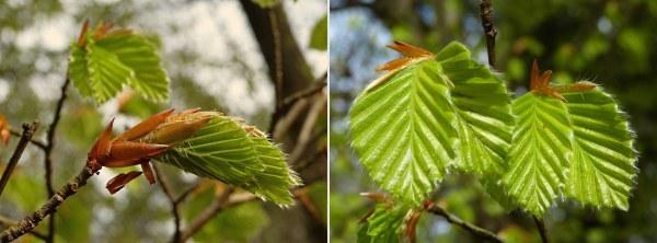 Leven en dood 3_4Het nieuwe leven ontspringt in het voorjaar - Foto: ©Louis Fraanje