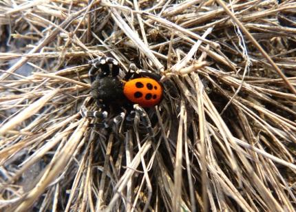 Wirwar van gras en spin (klik om te vergroten)