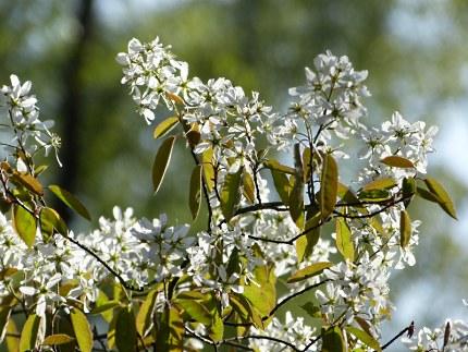 Schitterende witte bloemen - Foto: ©Louis Fraanje