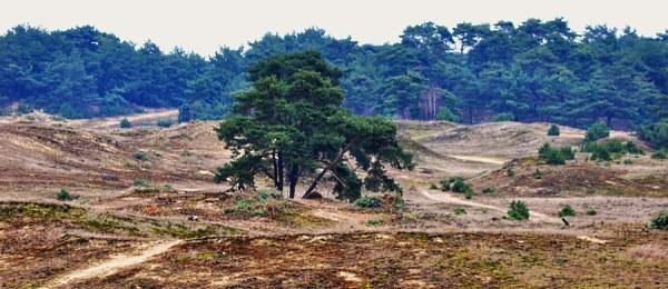Het Wekeromse Zand voor de werkzaamheden - foto: Louis Fraanje (klik om de hele foto te zien)