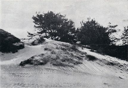 In het Wekeromsche Zand - thans nog een bakermat voor het wild