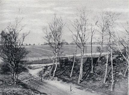 Hier ziet u neer in de laagte van de vroegere wildkeering, thans ligt er een oude karweg