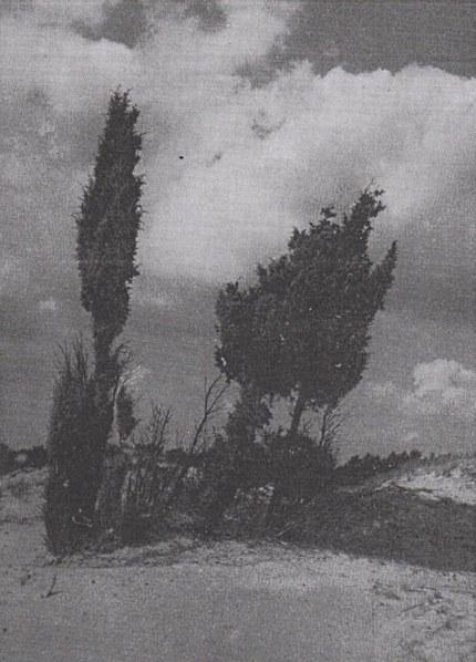 Tegen de dreigende onweerslucht staan de wakels als spookachtige silhouetten foto: Jac.Gazenbeek