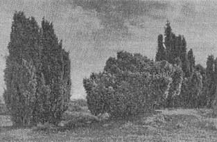 aug1950_2A
