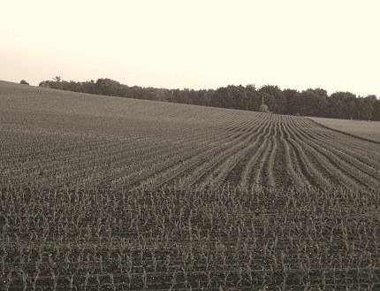De Emminkhuizerberg. De korenvelden zijn nu maisakkers geworden