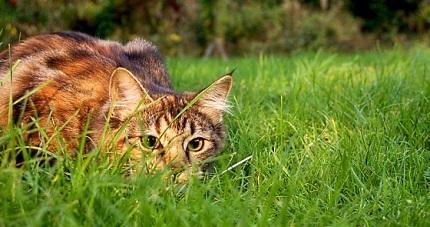Een kat op strooptocht