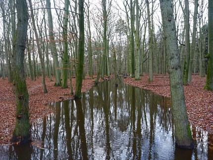 Elspeet-Harderwijk-fiets_2012-12-06_n35