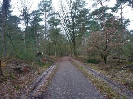 Elspeet-Harderwijk-fiets_2012-12-06_n38
