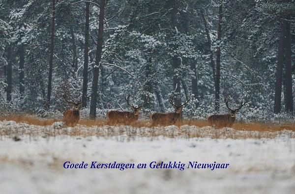 Goede kerstdagen en Gelukkig Nieuwjaar - De Veluwenaar: www.de-veluwenaar.nl/2013/12/10/goede-kerstdagen-en-gelukkig...