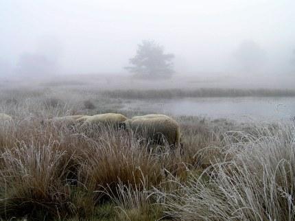 Shoarma in de mist