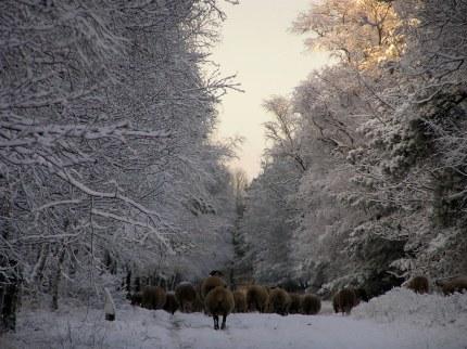 Het bestuur in de sneeuw