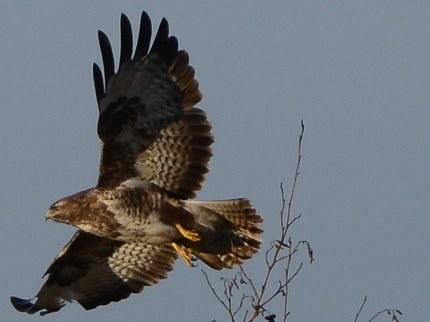 Een ogenblik later vliegt hij weg (klik om de hele foto te zien)