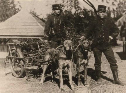 Honden bij de mitrailleurafdeling van een (infanterie) regiment Foto: Gem. archief Ede (klik om te vergroten)