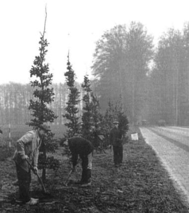 De aanplant van nieuwe bomen op de Middachter Allee. De mannen zijn: Willem Dibbets, Berend Smalbrugge en Chris Beumer.