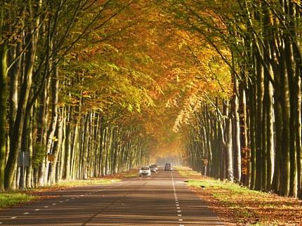 De Middachter Allee is in de herfst op haar mooist -Foto: Louis Fraanje