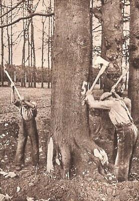 Bomen kappen op de Middachter Allee in de jaren '20