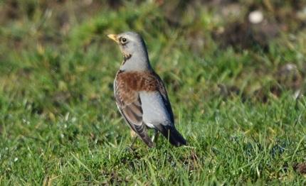 Als de vogel op de vorige foto het vrouwtje is moet dit wel een mannetje zijn - Foto: ©Louis Fraanje