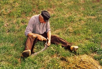 Veluwse boer is de zicht aan het haren