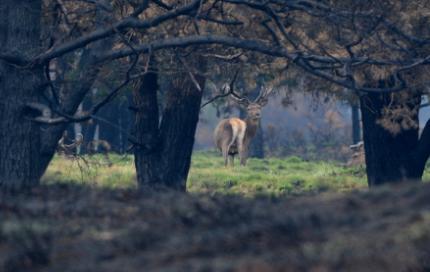 tussen de bruin verbrande bomen Foto: Louis Fraanje (klik om de hele foto te zien)