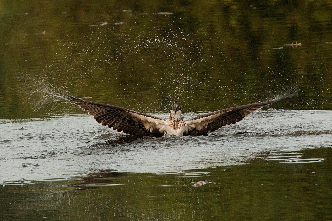 vogel in water 2013