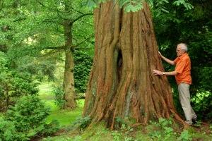 bk41natsequoia4