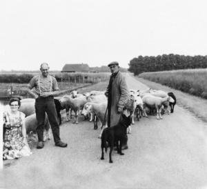 herder-ploeg-01