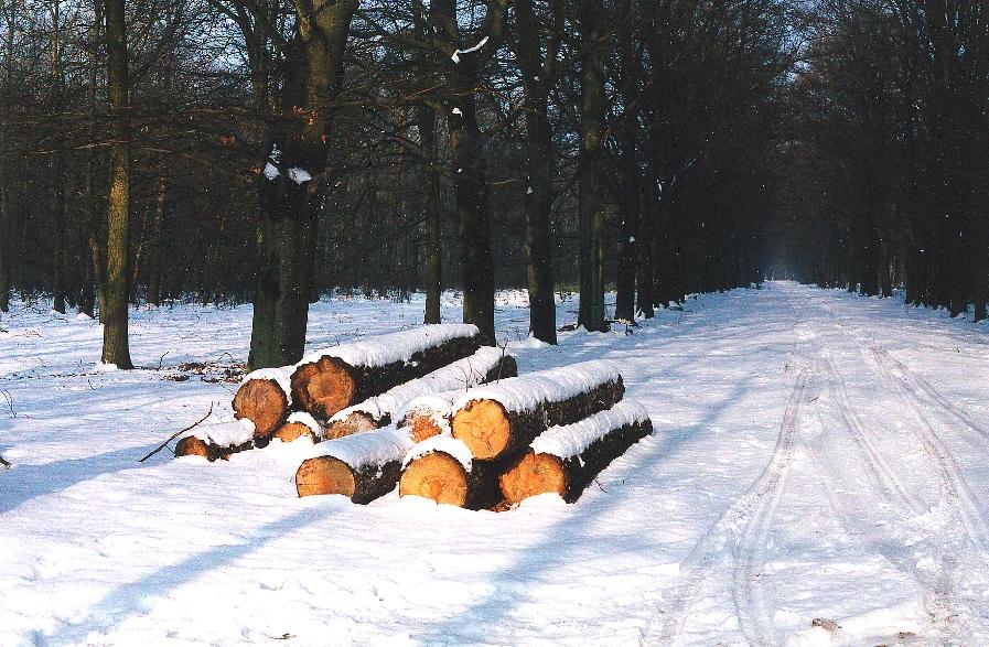 hout-sneeuw - kopie