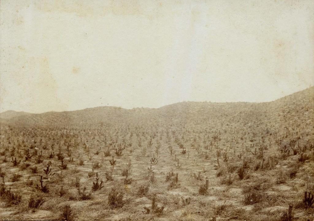bomen-gerritsfl