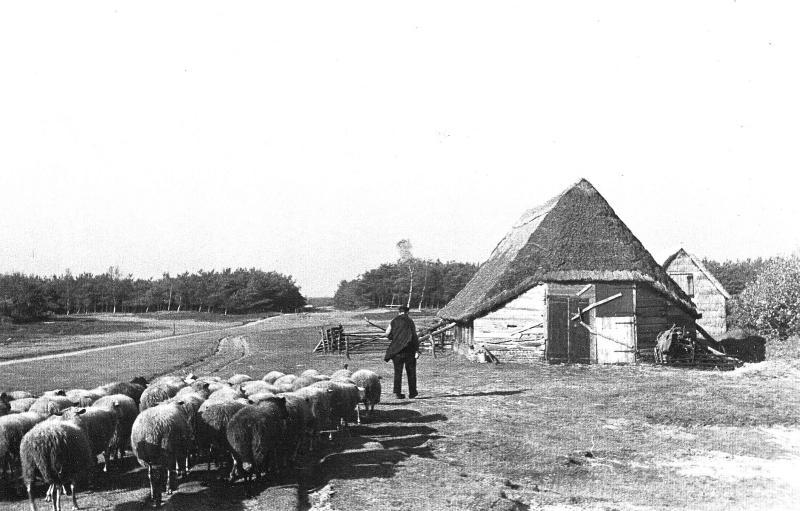 kudde-mouw-oud