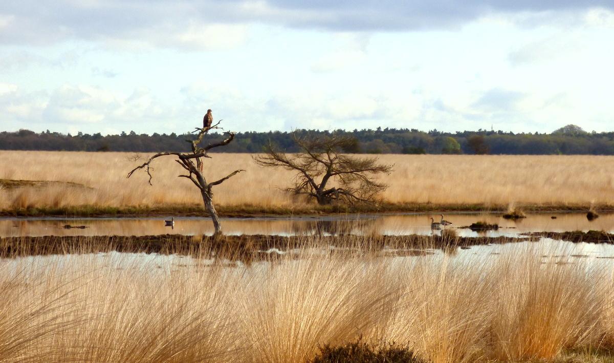 P1210433-001Daar zat de grote vogel op een tak van een dode boom - Foto: ©Janny Gomans