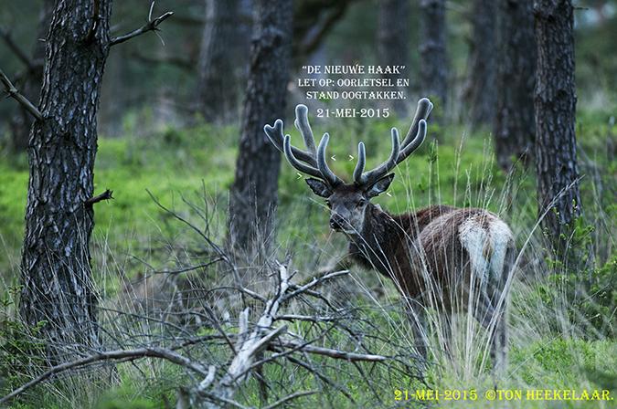 De Nieuwe Haak, alias Vergaffelde R-Middentak, 21-mei-2014 (2)