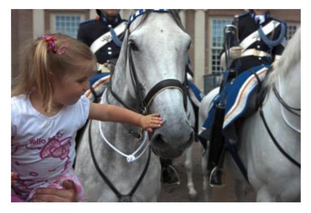 Paardenkracht kinderen
