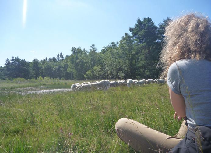 2015-07-21 Riannah bij schapen Elspeet (63)
