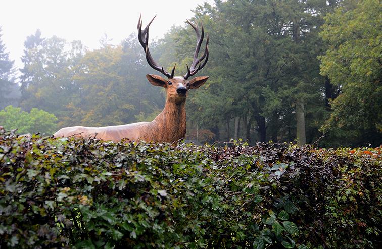 edelhert kijkt over de heg in vierhouten - de veluwenaar