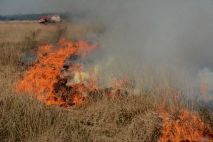 Heidebrand op de Hoge Veluwe - Foto: ©Florus van den Berg