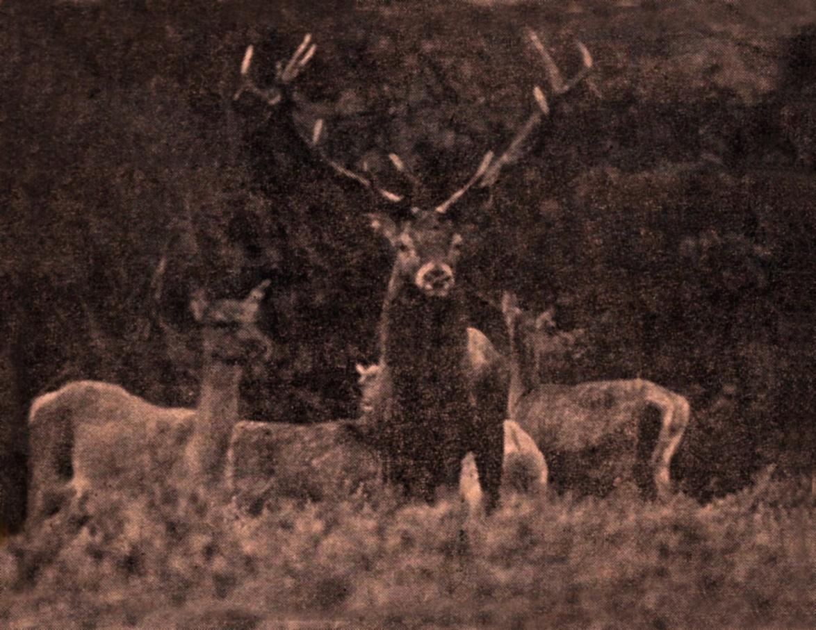 Claus foto artikel 24 febr.1970.-sepia