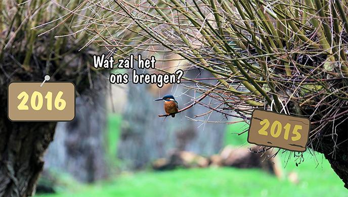 Ijsvogel 10 - nieuwe jaar