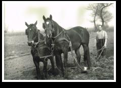 Hendrik Jan IJzerman - ploegen met paarden