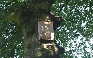 Een vleermuizenkast - Foto: ©Fransien Fraanje
