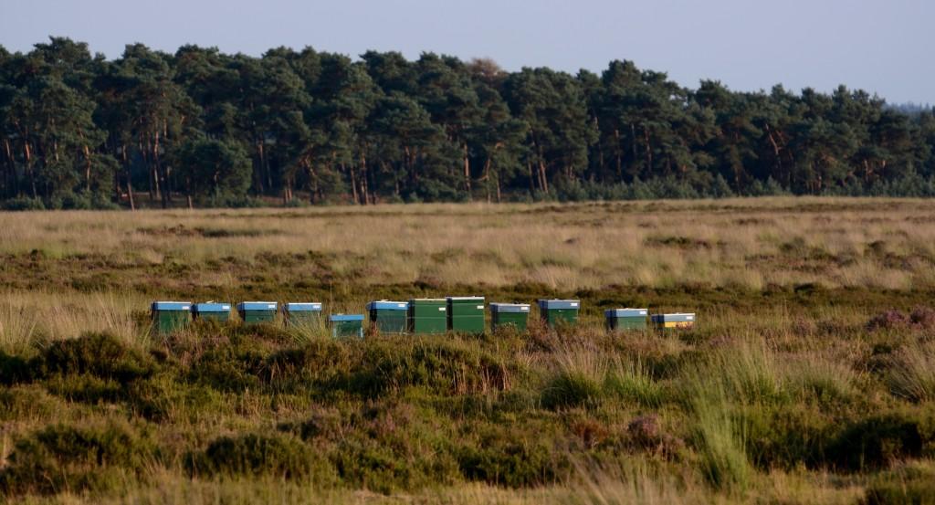 Bijenkasten op de Veluwse heide - Foto: Louis Fraanje