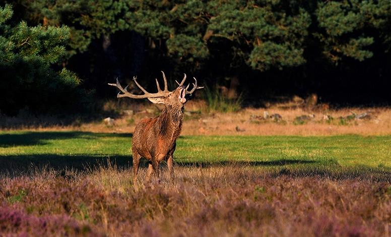 1 -Burlend hert Copyright Foto Louis Fraanje LF_9644 -