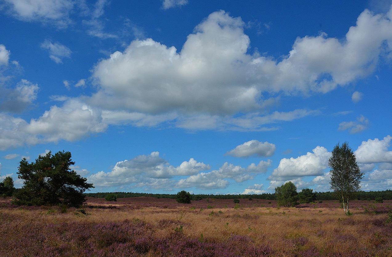 De uitgestrekte heidevelden van de Veluwe zijn uniek - Foto: ©Louis Fraanje