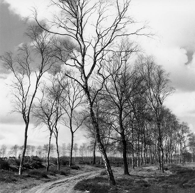Zandweg omzoomd door berken - Foto: ©Jac. Gazenbeek/JGS