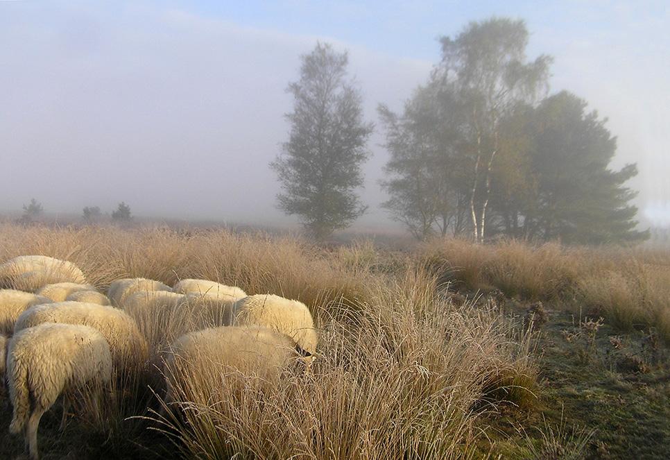 Weldra smelt de witte wereld weg - Foto: Christien Mouw